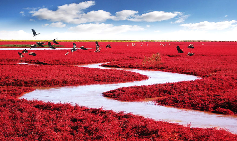 Красный пляж Паньцзинь.