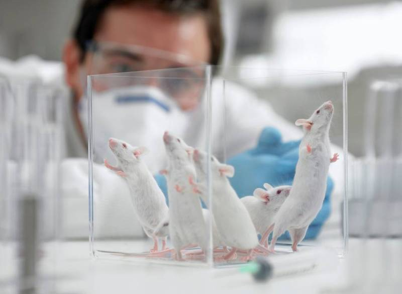 Мышь лаборатория пробирка